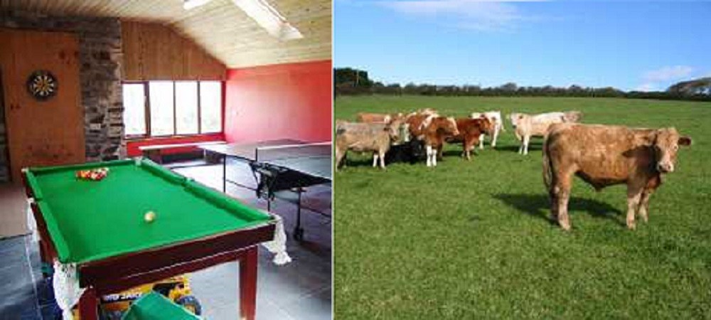 Cargurra Farm holiday cottages gamesroom and cows