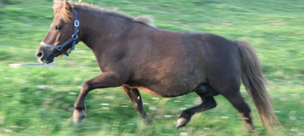Cornhill Farm Cottages horse