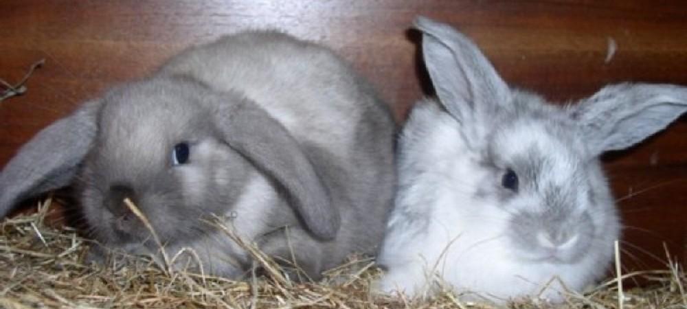 Cornhill Farm Cottages rabbits