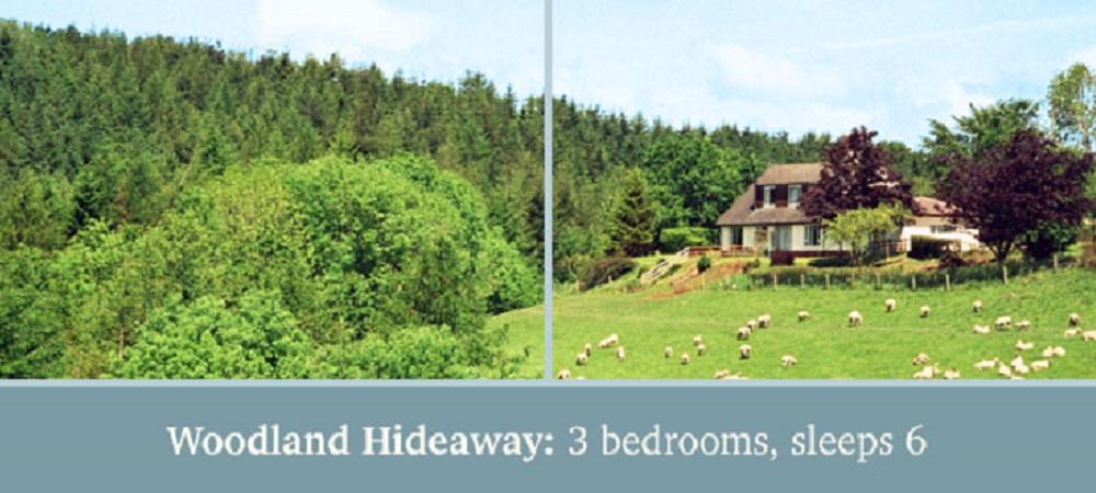 Drewstone Farm Holidays Woodland Hideaway