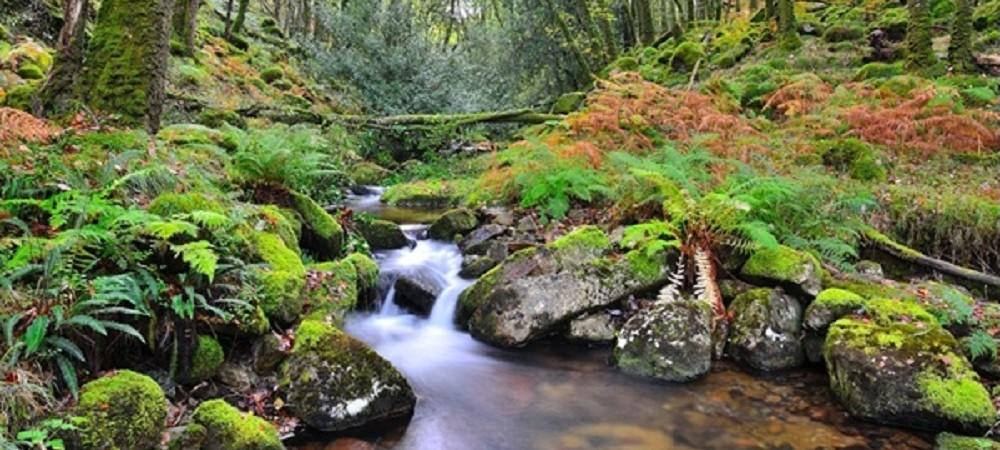 Knowle Farm Dartmoor National Park