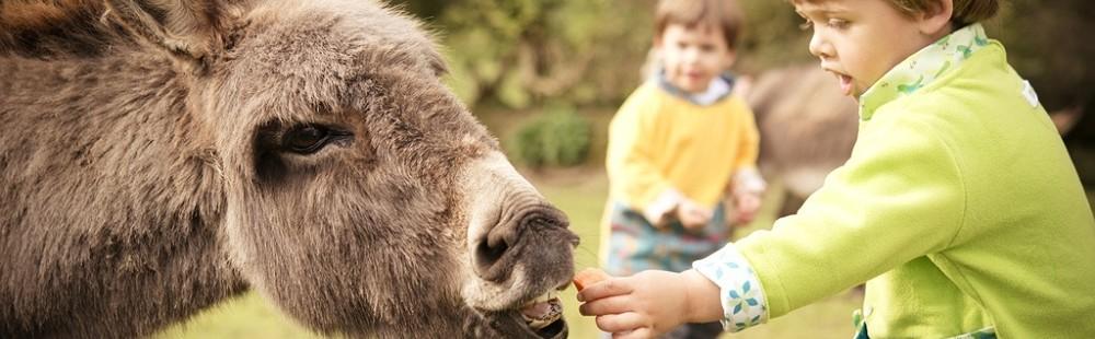 Knowle Farm donkey with children