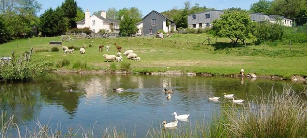 Knowle Farm pond