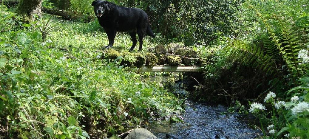 Lower Hearson Farm dog