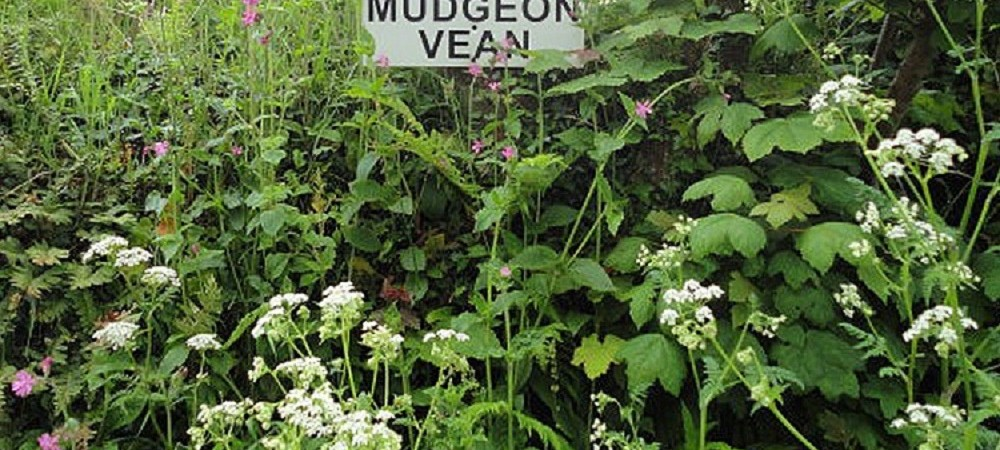Mudgeon Vean Farm sign