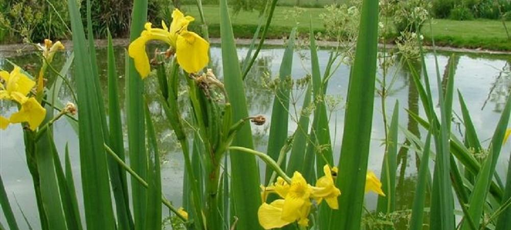 New House Farm Mangerton fishing lake