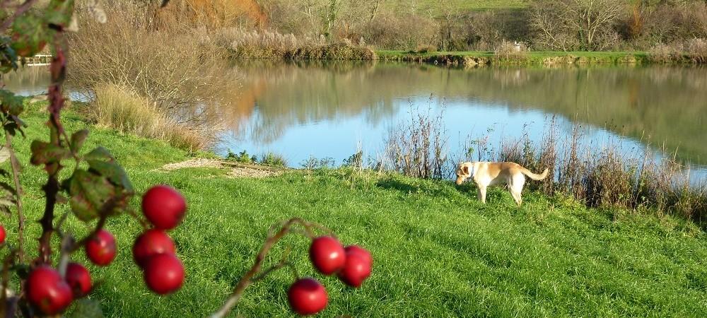 New House Farm dog by lake