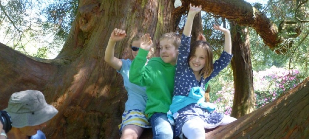 Pollaughan Farm Holiday Cottages climbing trees