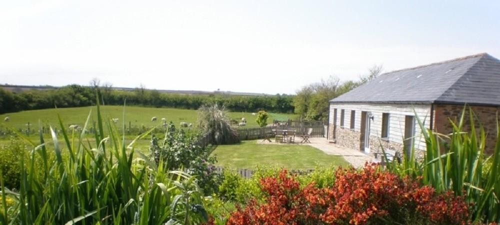 Pollaughan Farm Willows