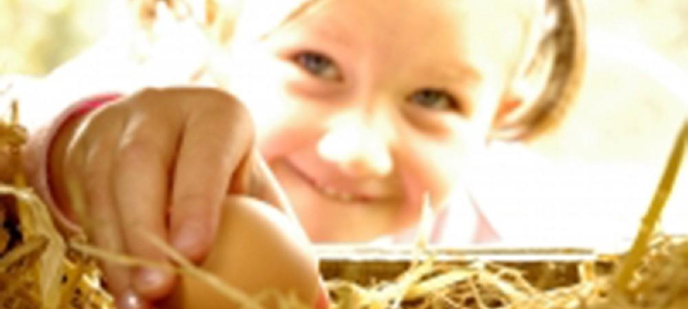 Pollaughan Farm toddler egg collecting