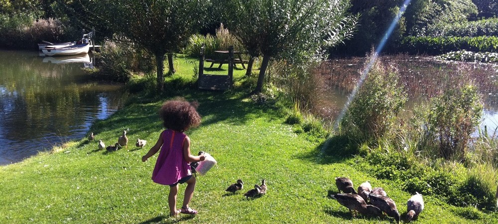 Rudge Farm Cottages ducks
