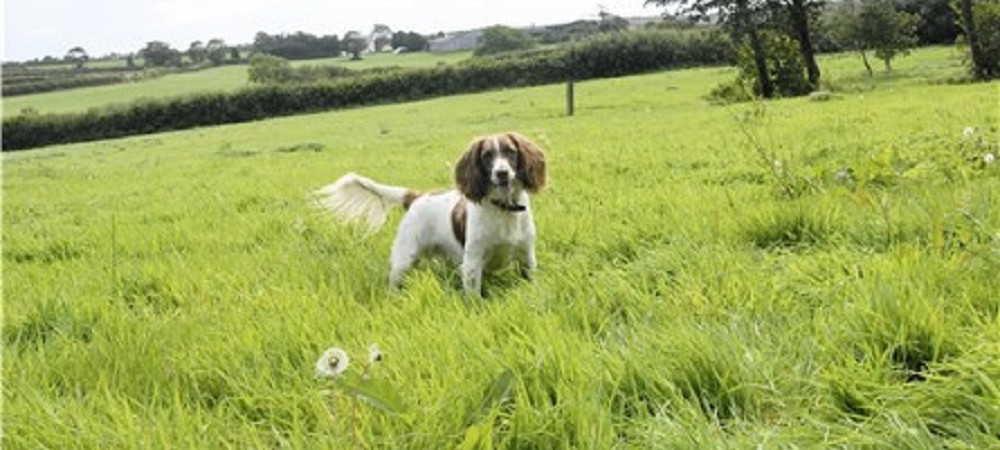 Talehay Holiday Cottages dog in field