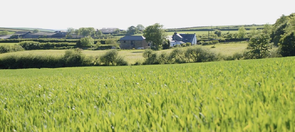 Talehay Holiday Cottages from the fields