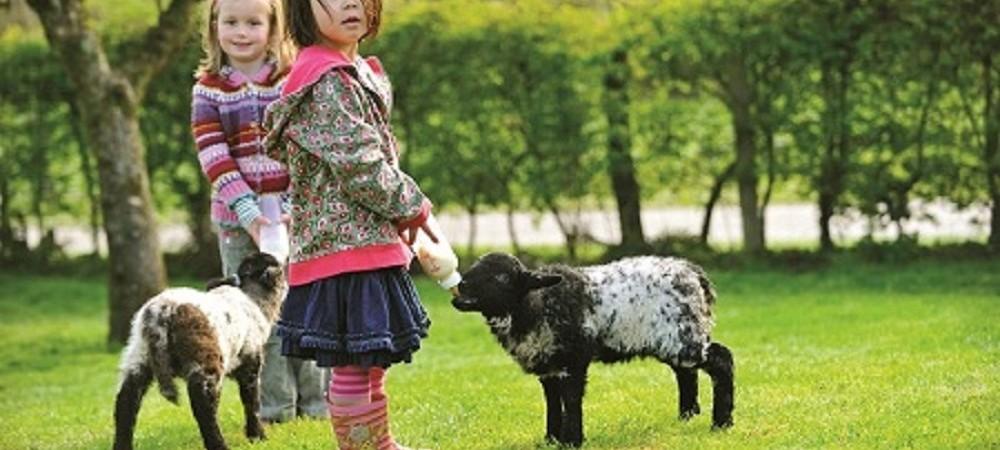 Tredethick Farm Cottages - girls bottle feeding lambs