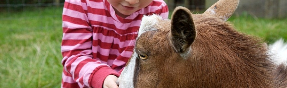 Tredethick Farm Cottages - toddler feeding goat