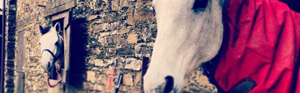 Trenake Manor Farm stables