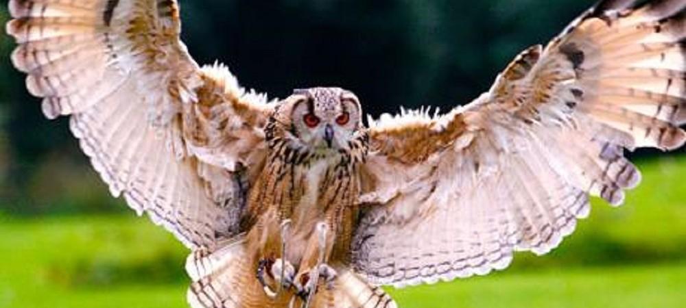 Woodlands Family Theme Park falconry