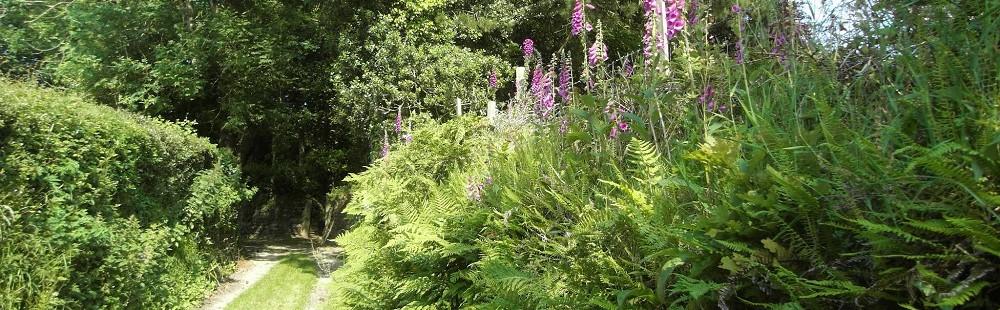 Cornwall hedgerow