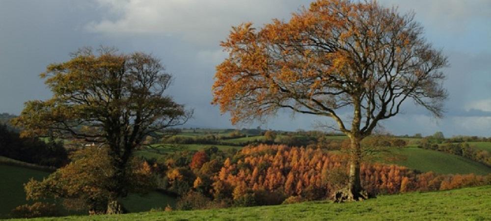 Ashridge Farm Holidays Devon in autumn