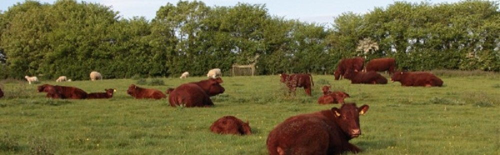 Ashridge Farm Holidays Devon - cows