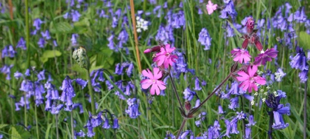 Ashridge Farm Holidays Devon - wildflowers