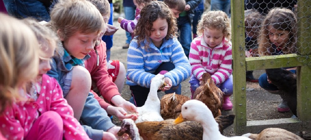 Bosinver Farm Holidays - animal feeding