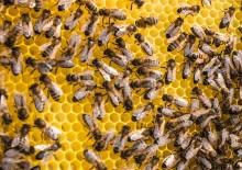 Quince Honey Farm, South Molton, Devon