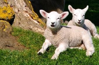 Farm holidays in Cornwall