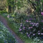 Coleton Fishacre spring flowers in Devon