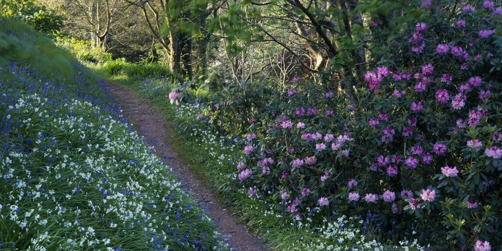 10 Of The Best Places To See Spring Flowers In Devon Cartwheel