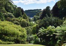 Trebah Garden, Cornwall