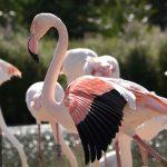 Slimbridge Wetland Centre Gloucestershire flamingos