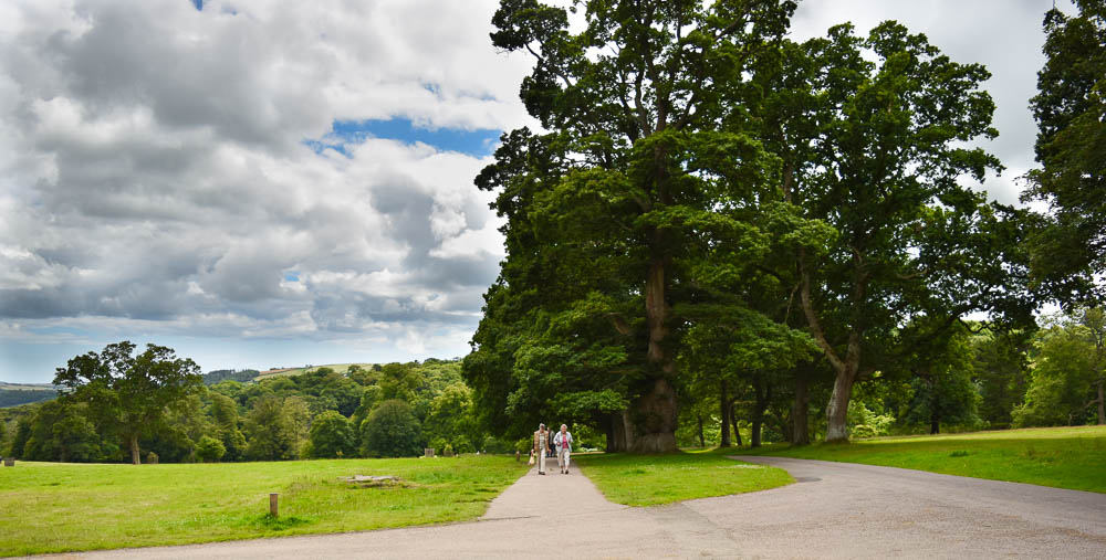 North drive of Lanhydrock House and Gardens, Cornwall