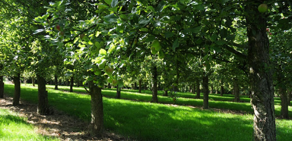 Perrys cider Somerset